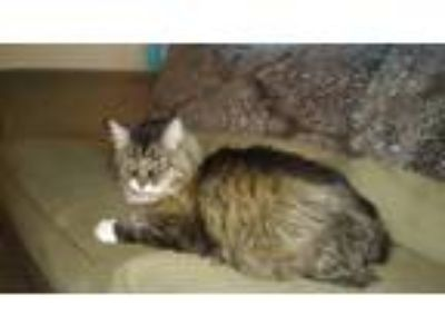 Craigslist - Cats for Adoption Classifieds in Greeley