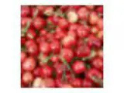 Issaquah Farmers Market Recipe Swap