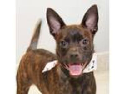 Adopt Jenkins a Black Mixed Breed (Small) / Mixed dog in Lansing, MI (24108022)