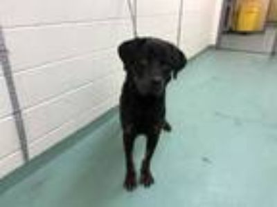 Adopt ROCKY a Black - with Tan, Yellow or Fawn Mixed Breed (Medium) / Mixed dog