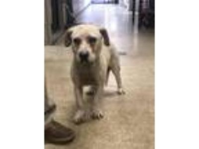 Adopt Doodle Bug a Hound (Unknown Type) / Mixed dog in Birmingham, AL (25614117)