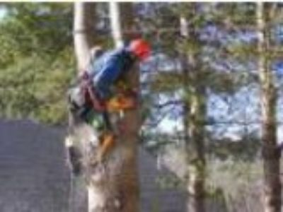 Humble Tree Service- Insured-Tree TrimmingPrunning