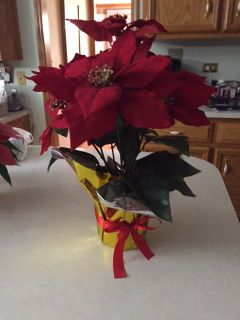 SILK POINSETTIA PLANT - BRAND NEW! ONLY 3 Cranberry left!