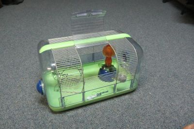Gerbille, souris, cage hamster / Gerbil, Mouse, Hamster Cage
