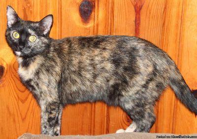 Female Cat born March of 2012.