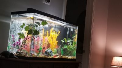 29 gallon aquarium with glass lid.. light.. filter.. decor