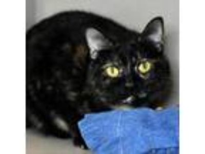 Adopt Minsey 190380 a All Black Domestic Shorthair cat in Escanaba