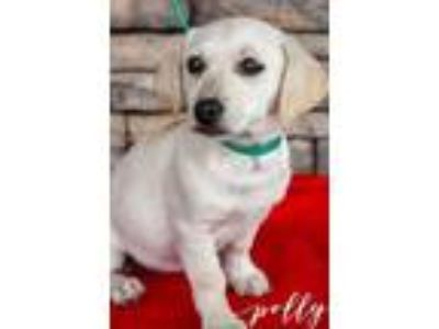 Adopt Polly a Tan/Yellow/Fawn Terrier (Unknown Type, Small) / Mixed dog in