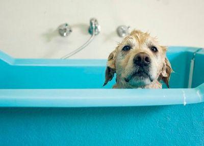 Dog Bathing service in Stuart