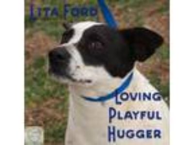 Adopt Lita Ford a Border Collie, Beagle