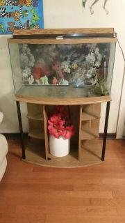55 gal bow front tank