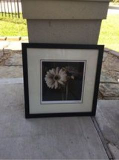 Black Daisy picture