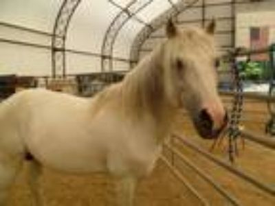 "Adopt Churchill ""donations needed, desperately needs your help!"" a Pony"