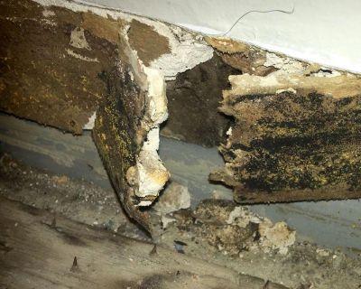 O2 Mold Testing & Inspection