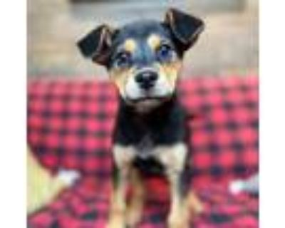 Adopt Butterfly a Mixed Breed