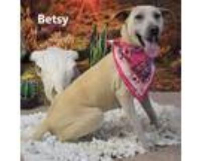 Adopt Betsy a White - with Tan, Yellow or Fawn Labrador Retriever dog in Yuma