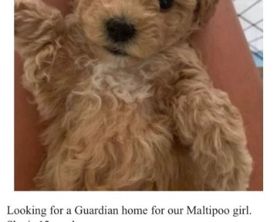 Guardian Home Opportunity for a Maltipoo