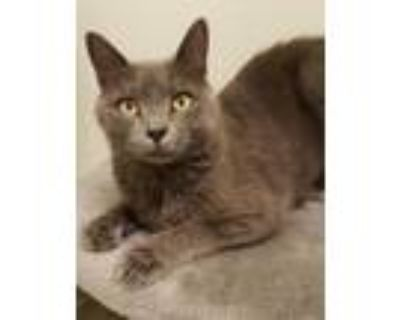 Kya, Domestic Shorthair For Adoption In Columbus, Indiana