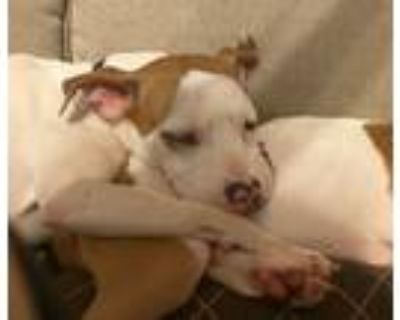 Adopt Skittles a Mixed Breed (Medium) / Hound (Unknown Type) / Mixed dog in