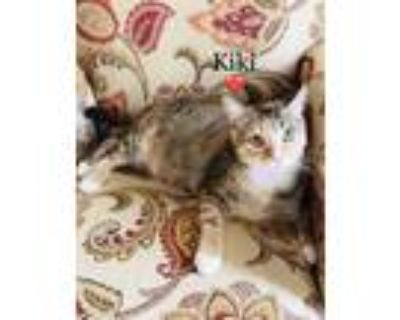 Adopt KiKi Kitty a Domestic Short Hair