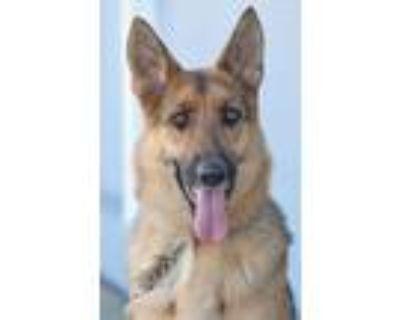 Adopt Jana von Julich a Tan/Yellow/Fawn - with Black German Shepherd Dog / Mixed