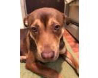 Adopt Barklie ~will travel for right family~ a Pit Bull Terrier