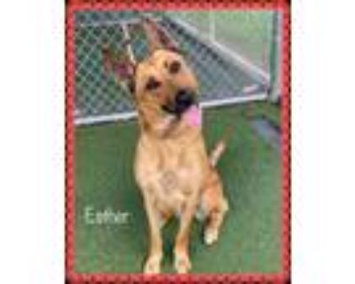 Adopt ESTHER a Tan/Yellow/Fawn - with Black Shepherd (Unknown Type) / Mixed dog