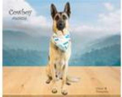 Adopt Dog a Red/Golden/Orange/Chestnut German Shepherd Dog / Mixed dog in