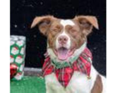 Adopt Mogwai a Border Collie / Mixed Breed (Medium) / Mixed dog in Warren