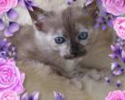 Layla's Kittens