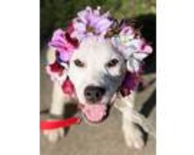 Adopt Avery a Mixed Breed