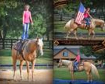 Gorgeous Talented Palomino with Flaxen Mane and Tail Perfect for Anyone