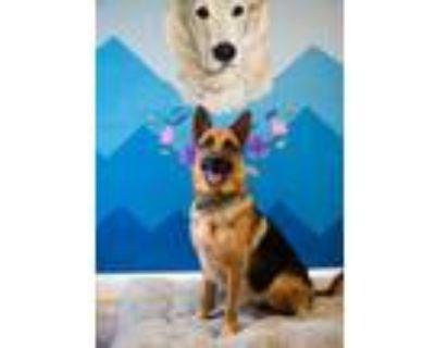 Adopt Harley a Black German Shepherd Dog / Mixed dog in Newport News