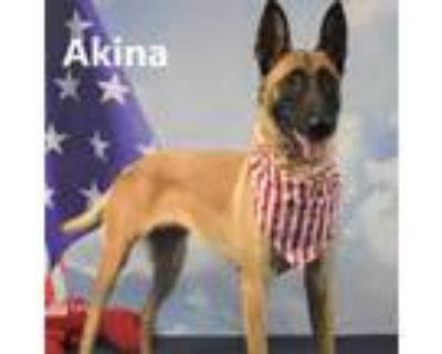 Adopt Akina a Tan/Yellow/Fawn Belgian Malinois / Mixed dog in Yuma