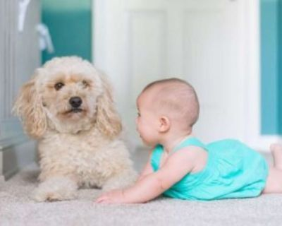 $75 carpet cleaning with Eko Fresh Cleaning (678) 668-9908