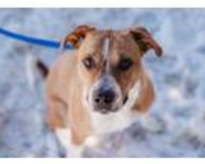 Adopt Bubbles a Brown/Chocolate Mixed Breed (Large) / Mixed dog in Cheyenne