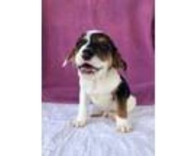 Adopt Decal a Beagle