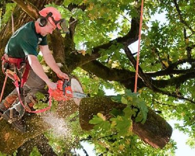 Picayune Tree Removal - A Team of Experienced Experts