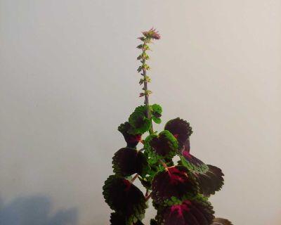 Lovely perennial flowering plant