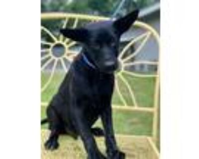 Usher, Terrier (unknown Type, Small) For Adoption In New Iberia, Louisiana