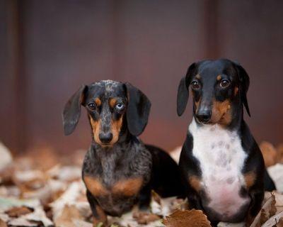 Pet Fencing Dealership Opportunity