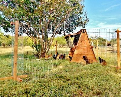 Portable Chicken coop and Yard