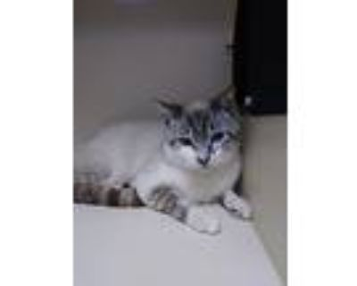 Fayette, Domestic Shorthair For Adoption In Portsmouth, Virginia
