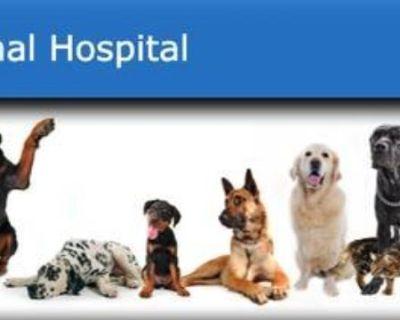 Animal Hospital Seeking Staff Assistant (Watseka)