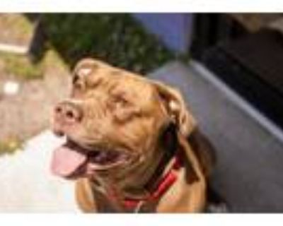 Adopt Marley a Terrier, Mixed Breed
