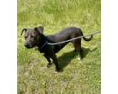 Adopt Ruby a Terrier (Unknown Type, Small) / Mixed dog in Genoa, IL (31692930)