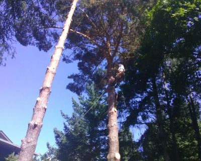 Tree Removal and Limb Ups/ Licenced and Insured Professionals.
