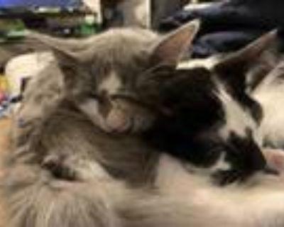 Dobby & Rabbit