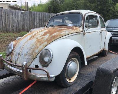 1961 VW Bug