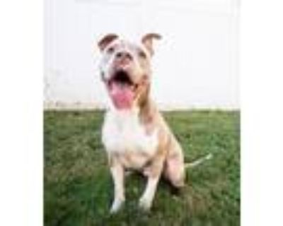Adopt Nexus - IN FOSTER a Mixed Breed